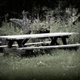 picnic table photo