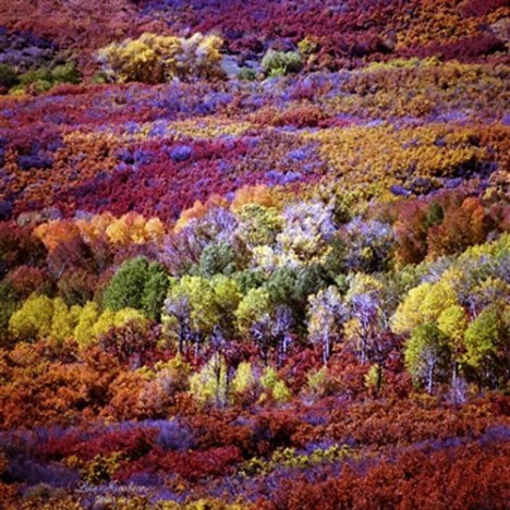 awesome color - aspens