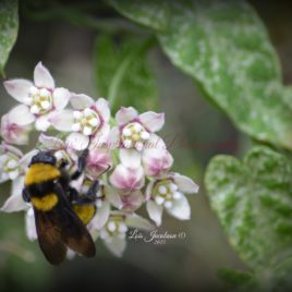 Bumble Bee and the flower