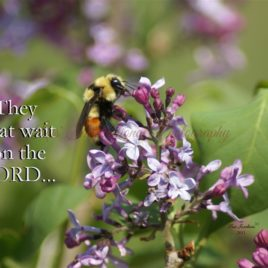 They that wait on the Lord