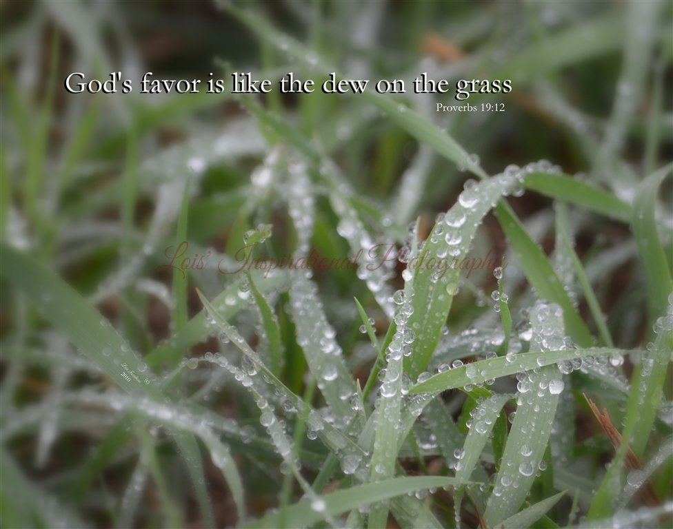 God's Favor is Like the Dew
